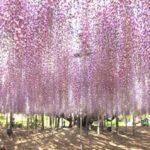栃木足利フラワーパーク